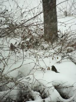 Birds in the brush, Jan 21