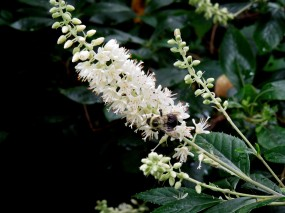 Bee on flower at Longwood Gardens, Kennett Square, PA (8-3-14)