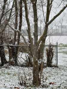 The first snow of the year, 1-6-15