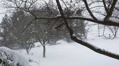 Jan 22 snow 1