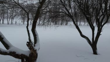 jan 22 snow 3
