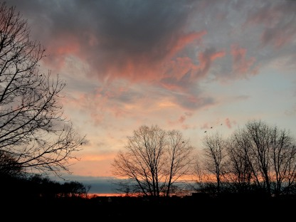 bare tree limbs against colorful clouds at sunset, 3-16