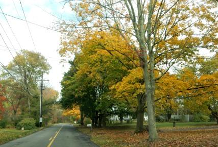 J. J. Thomas Ross, The Author Chronicles, fall trees, fall street scene