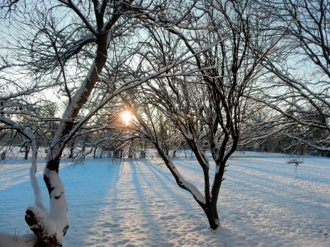 The Author Chronicles, J. Thomas Ross, snowy sunrise, snow on trees