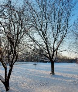 The Author Chronicles, Top Picks Thursday, J. Thomas Ross, trees in snow