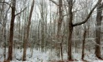 blog photo 1-25 – snow in thewoods