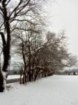 blog photo 1-25 – wood line along road insnow