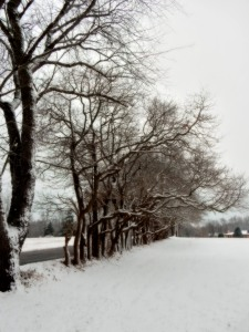 The Author Chronicles, J. Thomas Ross, snow and trees along the road
