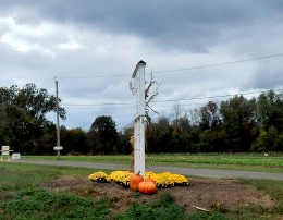 The Author Chronicles, J. Thomas Ross, pumpkins and flowers, Specca farm, NJ