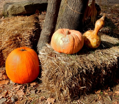 The Author Chronicles, J. Thomas Ross, pumkins and squash, Styers Orchard, PA