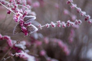 The Author Chronicles, J. Thomas Ross, winter scene