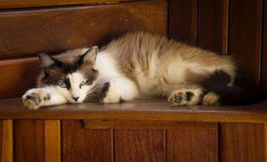 The Author Chronicles, J. Thomas Ross, cat on wood shelf