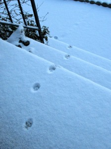 The Author Chronicles, J. Thomas Ross, cat footprints on snowy steps