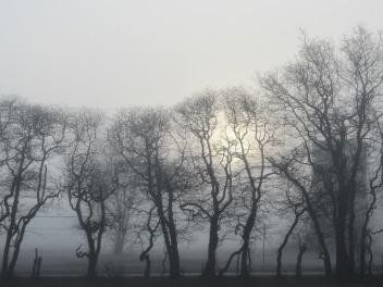 The Author Chronicles, J. Thomas Ross, fog and trees, sun through fog