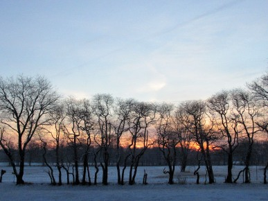The Author Chronicles, J. Thomas Ross, trees and snow at sunrise