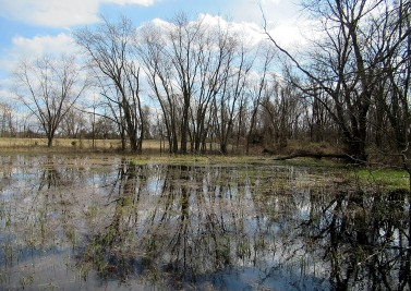 The Author Chronicles, J. Thomas Ross, leafless trees reflected in vernal pond