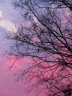 The Author Chronicles, J. Thomas Ross, bird in tree with sunset clouds in background, inspiration