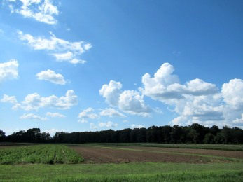 The Author Chronicles, J. Thomas Ross, fair weather clouds, fields