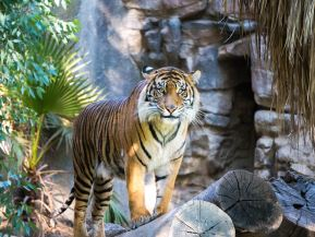 The Author Chronicles, J. Thomas Ross, tiger, Rick L