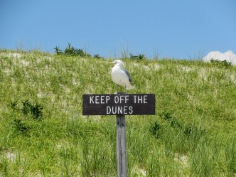 The Author Chronicles, Top Picks Thursday, J. Thomas Ross, sea gull, keep off the dunes sign, shore