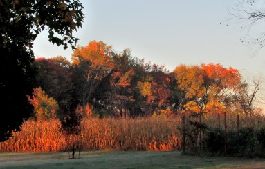 The Author Chronicles, J. Thomas Ross, fall morning, trees and corn