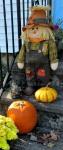 11-7 blog – pumpkins and scarecrow –vertical