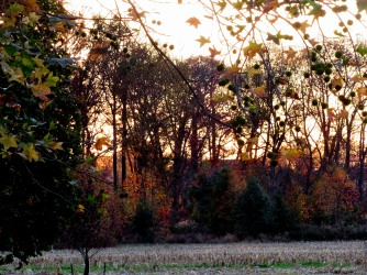 The Author Chronicles, J. Thomas Ross, Top Picks Thursday, November, color on trees at dusk