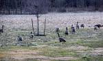 03-20-blog-geese