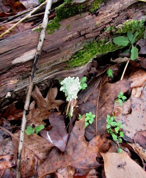 The Author Chronicles, Top Picks Thursday, J. Thomas Ross, log with moss and lichen, NC, late winter