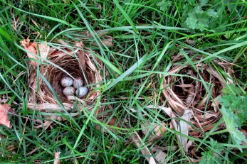 The Author Chronicles, Top Picks Thursday, J. Thomas Ross, bird nests, bird nest with eggs