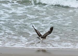 The Author Chronicles, Top Picks Thursday, J. Thomas Ross, Island Beach State Park, seagull taking flight, beach scene