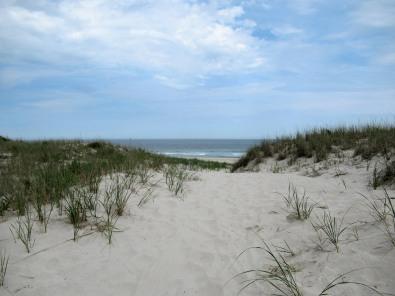 The Author Chronicles, Top Picks Thursday, J. Thomas Ross, Island Beach State Park, beach dunes and grasses