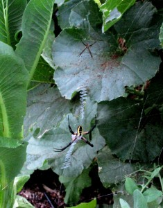 The Author Chronicles, Top Picks Thursday, J. Thomas Ross, August, female and male garden spiders