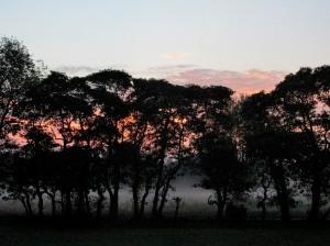 The Author Chronicles, Top Picks Thursday, J. Thomas Ross, foggy dawn