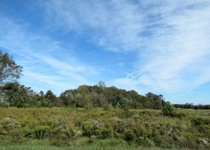 The Author Chronicles, Top Picks Thursday, J. Thomas Ross, wildflowers in field, trees and wispy cloud