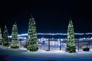 The Author Chronicles, Top Picks Thursday, J. Thomas Ross, outdoor Christmas trees with white lights