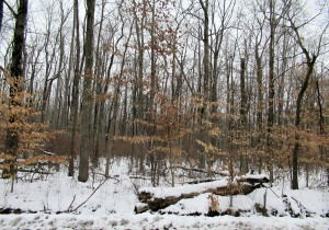 The Author Chronicles, Top Picks Thursday, J. Thomas Ross, snow in the woods along Oxmead Road